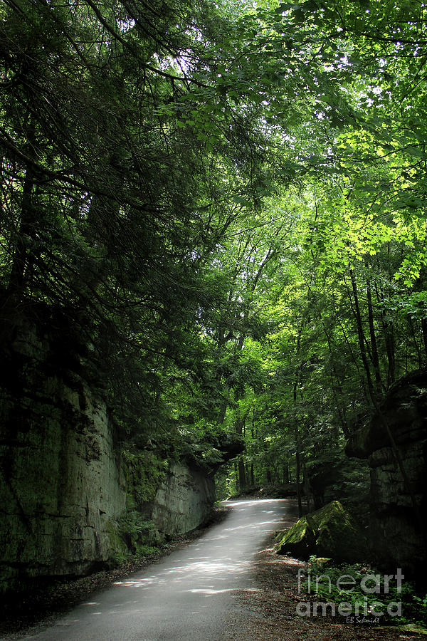 Road Through the Forest Gorge by E B Schmidt
