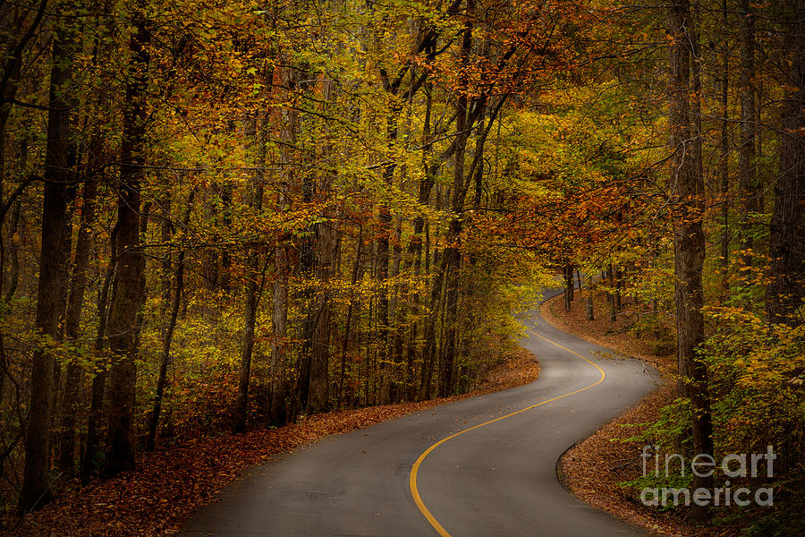 Road through Tishomingo State Park by T Lowry Wilson