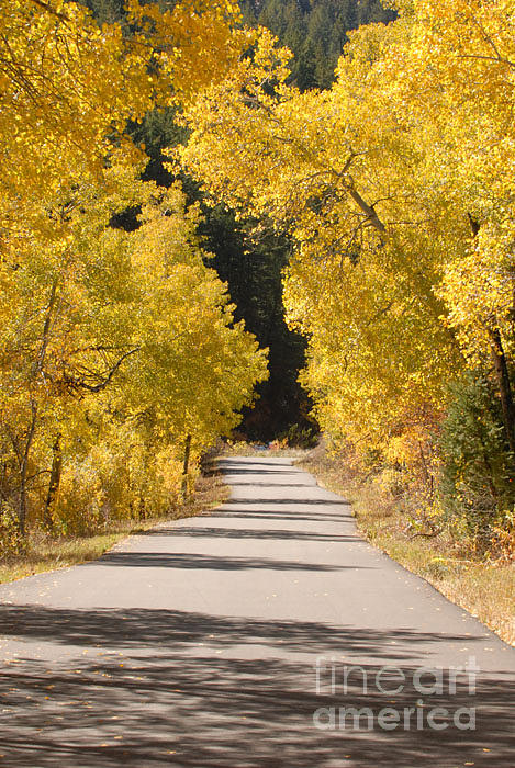 Autumn Photograph - Road To Autumn by Dennis Hammer