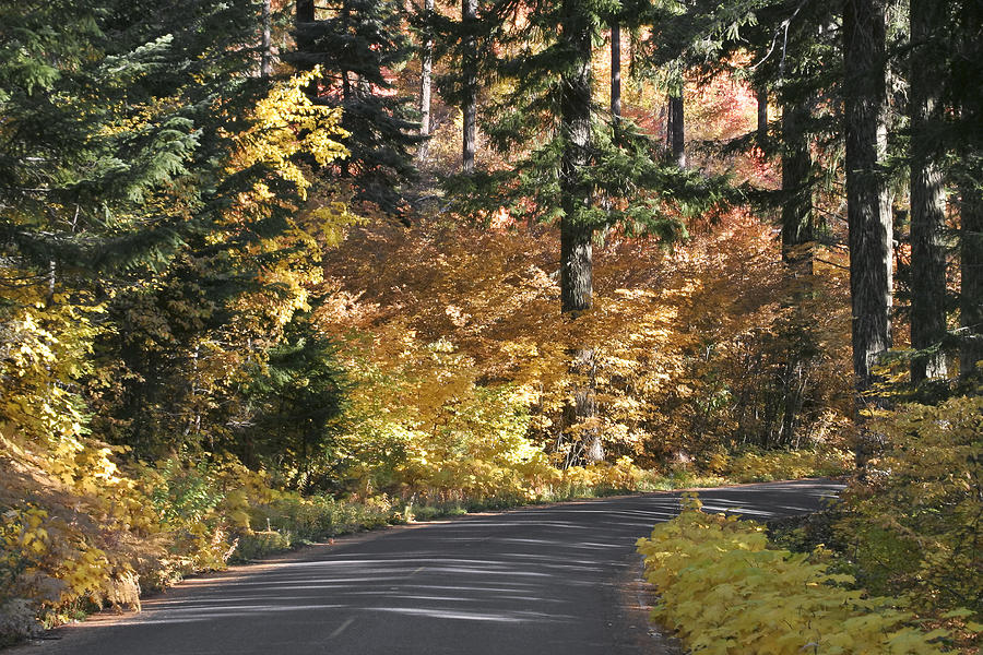 Road Photograph - Road To Autumn by Wes and Dotty Weber