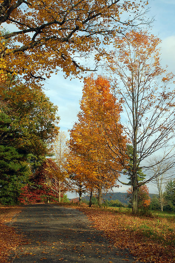 Tree Photograph - Road To Dana by Mark Wiley
