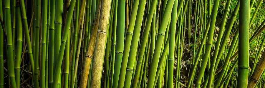 Road To Hana Photograph - Road To Hana Bamboo Panorama - Maui Hawaii by Brian Harig