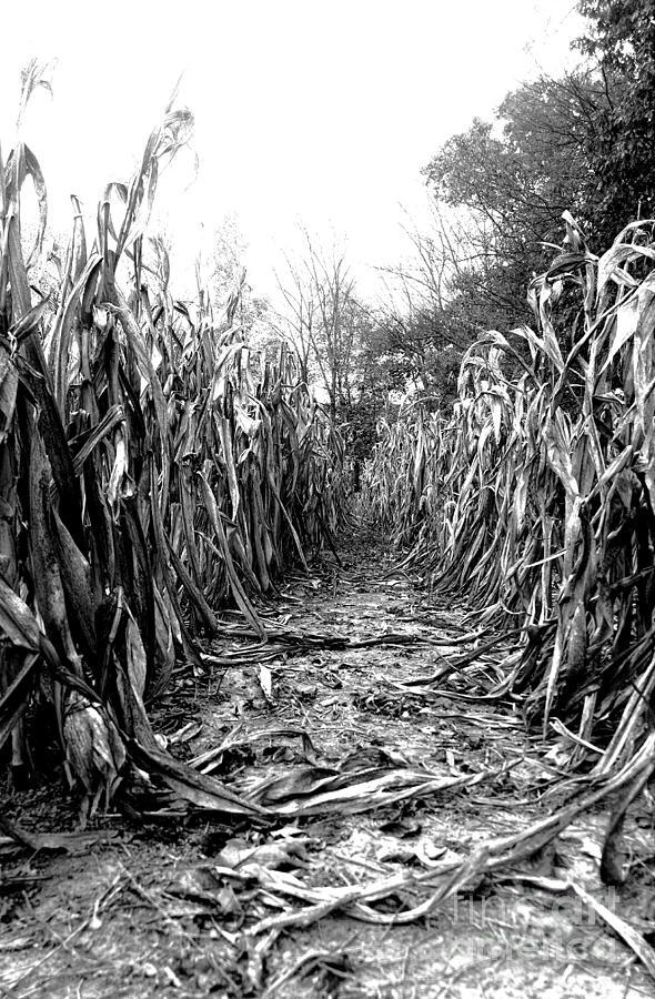 Digital Photo Digital Art - Road To Harvest by Rebecca Lynn Willoughby