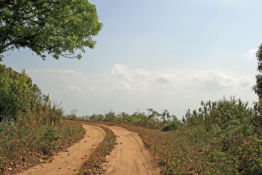 Forest Photograph - Road To Heaven by Prashanth Niar