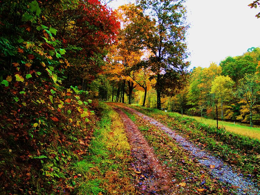 Landscape Photograph - Road To My Farm by Terry  Wiley