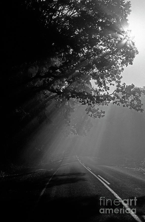 Travel Photograph - Road With Early Morning Fog by Jim Corwin