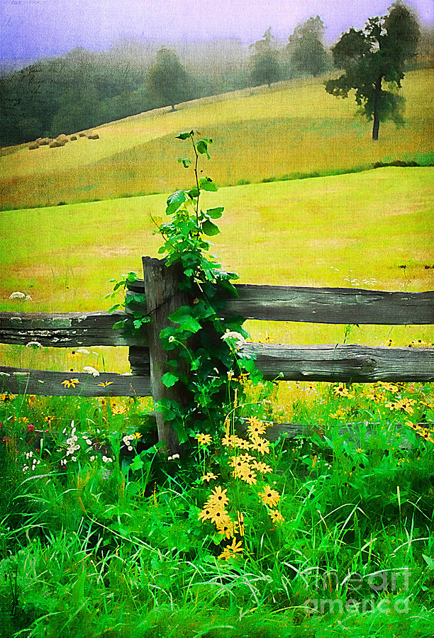 Agriculture Photograph - Roadside Beauty by Darren Fisher