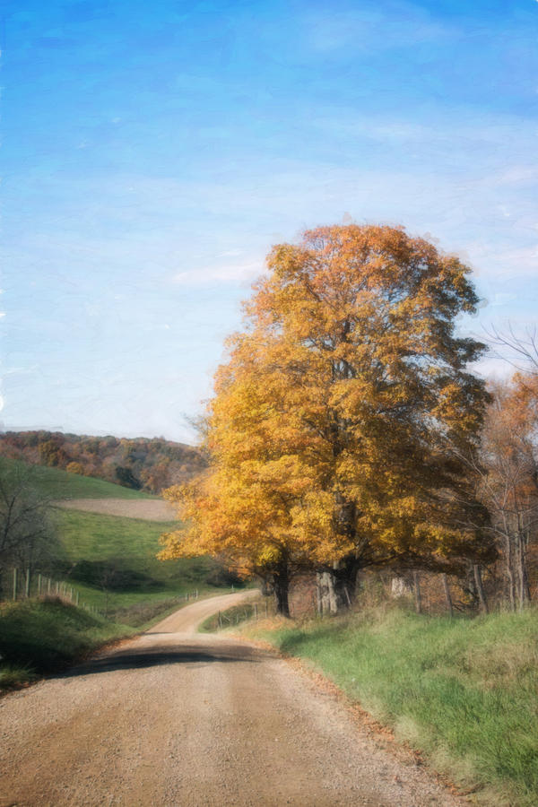 Road Photograph - Roadside Tree In Autumn by Tom Mc Nemar