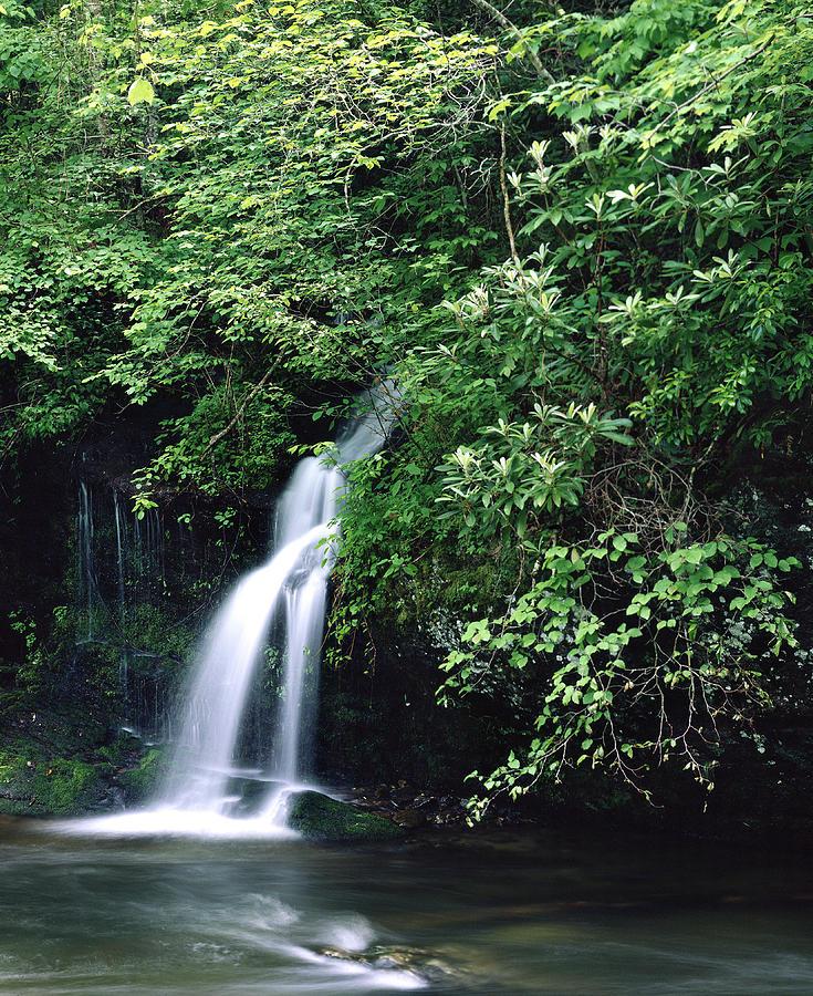 Foliage Photograph - Roadside Waterfall Smoky Mountains by Tony Ramos