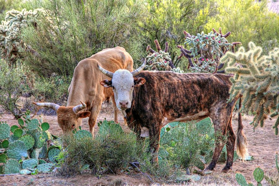 Roaming Bulls by Kimmi Craig