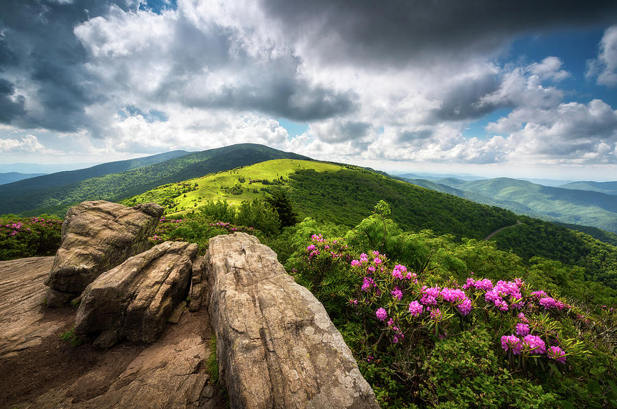 Roan Mountain Radiance Appalachian Trail NC TN Mountains by Dave Allen