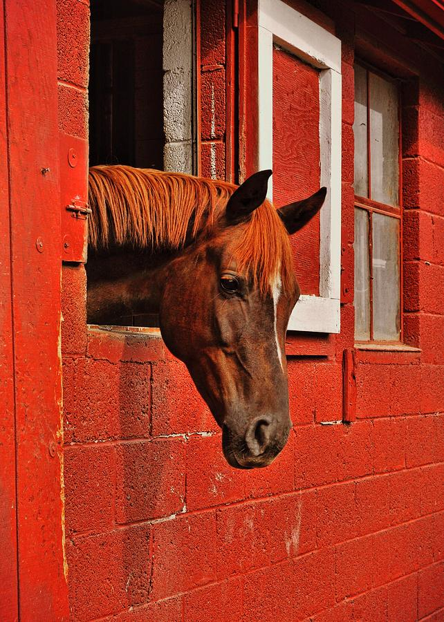 Horse Photograph - Roan Red by JAMART Photography