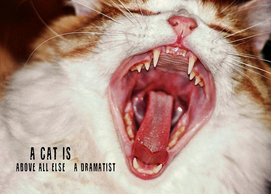 Cat Photograph - Roar Quote by JAMART Photography