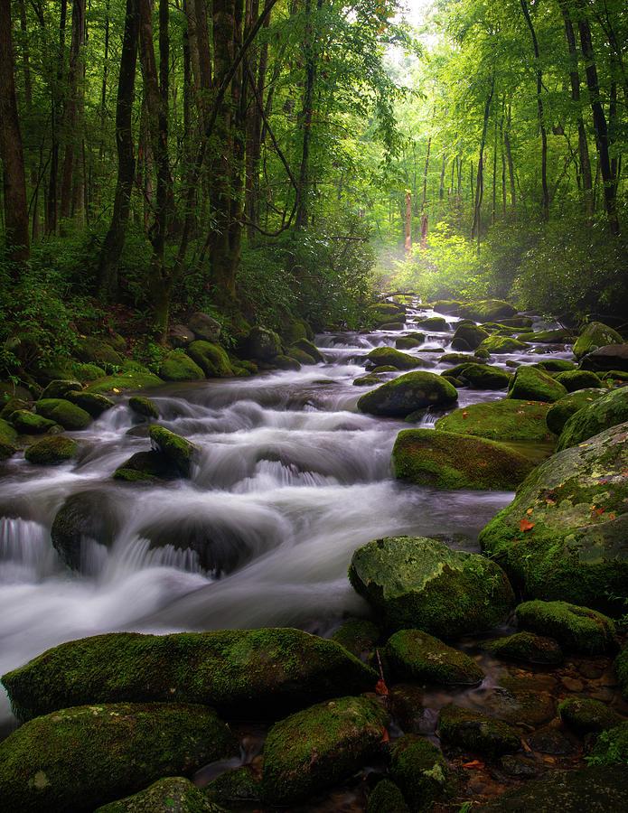 Great Smoky Mountains Roaring Fork Gatlinburg Tennessee by Mike Koenig