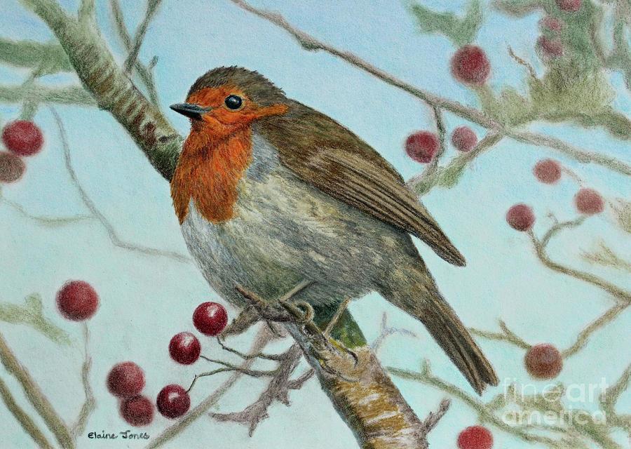 Robin in a Hawthorn Tree by Elaine Jones