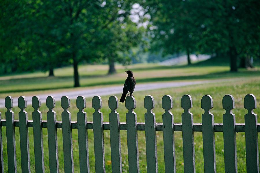 Bird Photograph - Robin On A Fence by Lone Dakota Photography