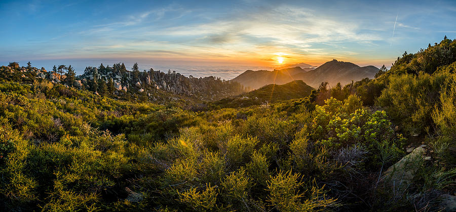 California Photograph - Rock Garden Explosion by Bryan Toro