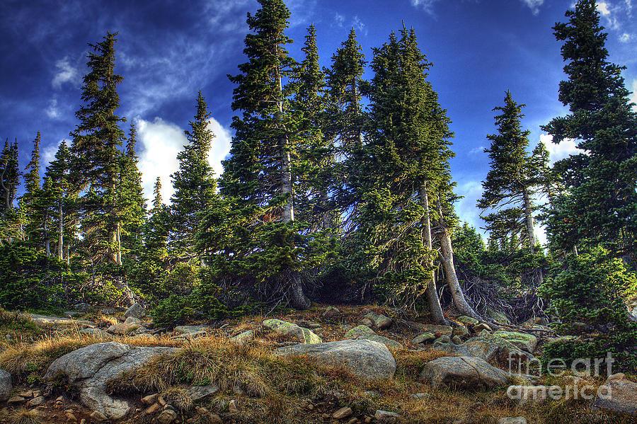 Nature Photograph - Rock Garden by Pete Hellmann
