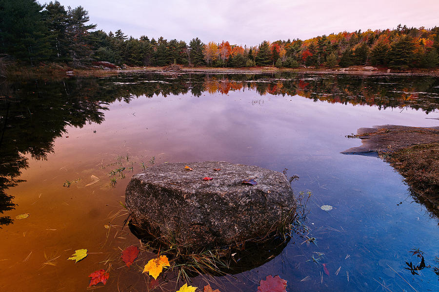 Rock In A Pond Acadia Natioanl Park Maine Photograph by George Oze