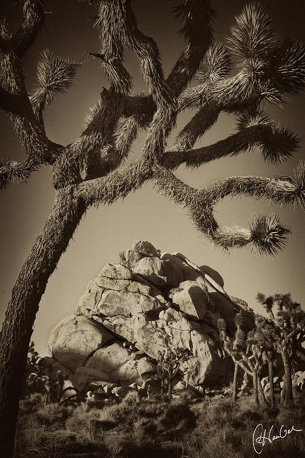 Joshua Photograph - Rock Mound At Joshua Tree National Park by Christine Hauber