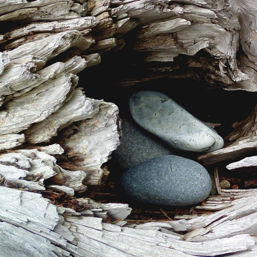 Rocks Photograph - Rock Nest by Holly Ross