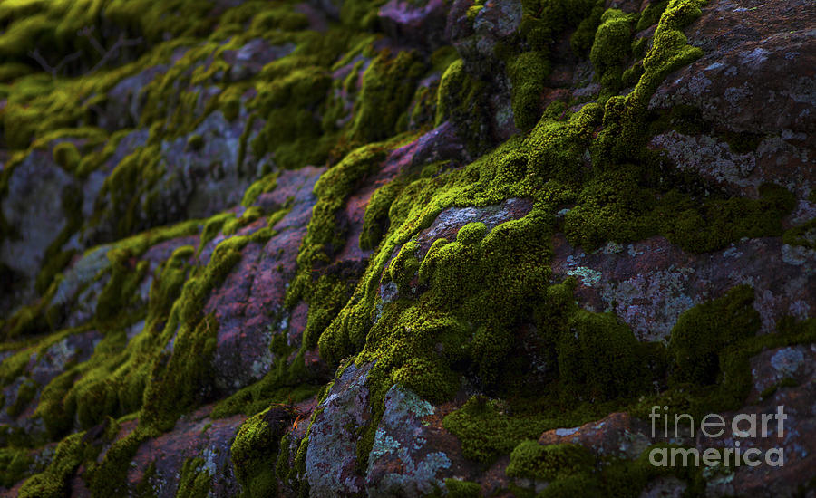 Rock Photograph - Rock With Green  by Barbara Schultheis