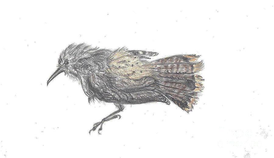 Rock Wren by Dawn Senior-Trask