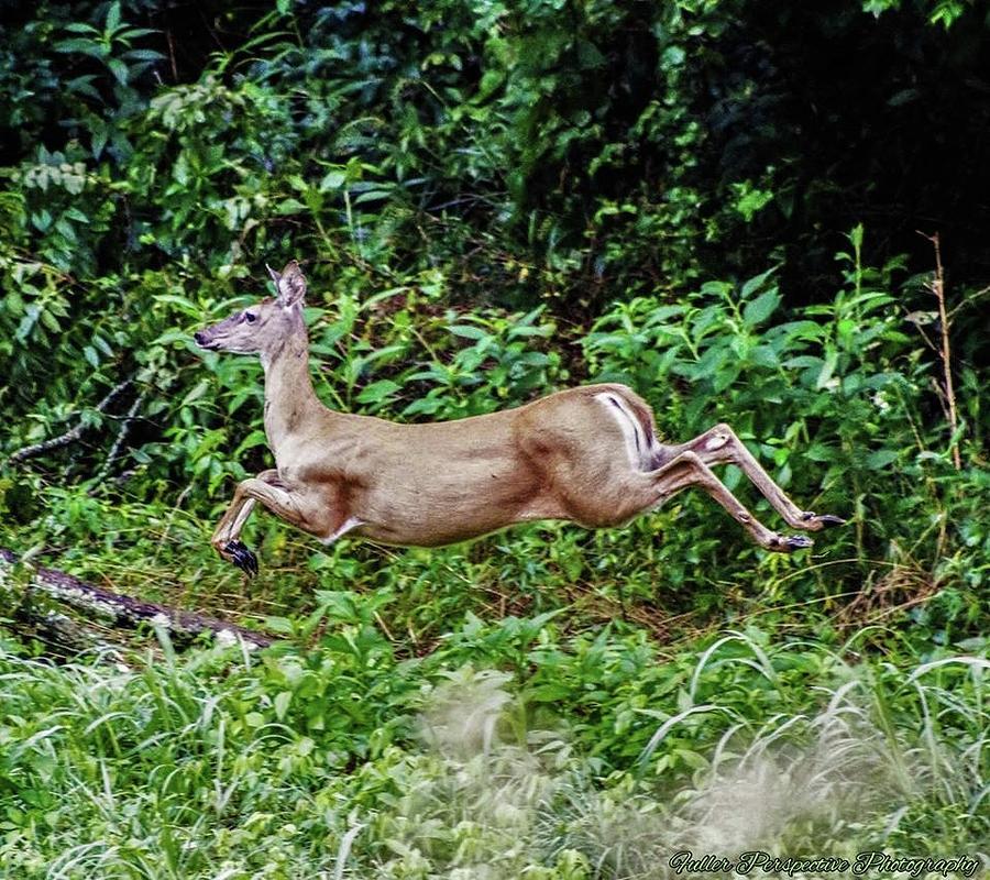 Deer Photograph - Rocking Deer by Chad Fuller