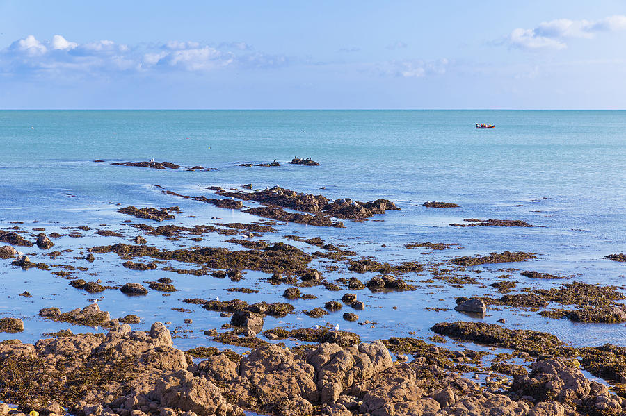 Rocks and seaweed and seagulls in the Irish sea at Howth by Semmick Photo