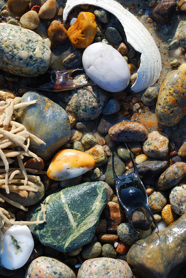 Rocks Photograph - Rocks And Shells by Charles Harden