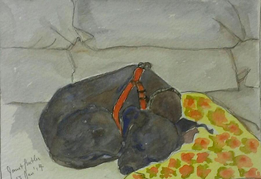 Watercolors Painting - Rocky by Janet Butler