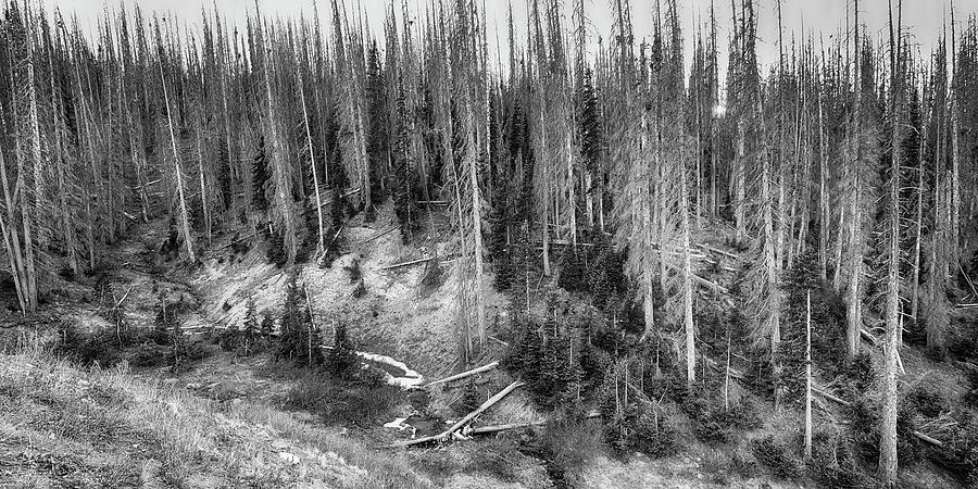 Black Photograph - Rocky Mountain High Elevation Forest Large Panorama by James BO Insogna