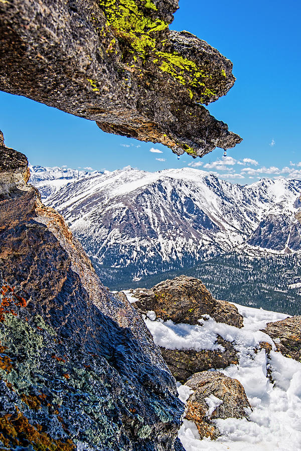 Rocky mountain lichen photograph by keith ducker rocky mountain national park photograph rocky mountain lichen by keith ducker sciox Image collections
