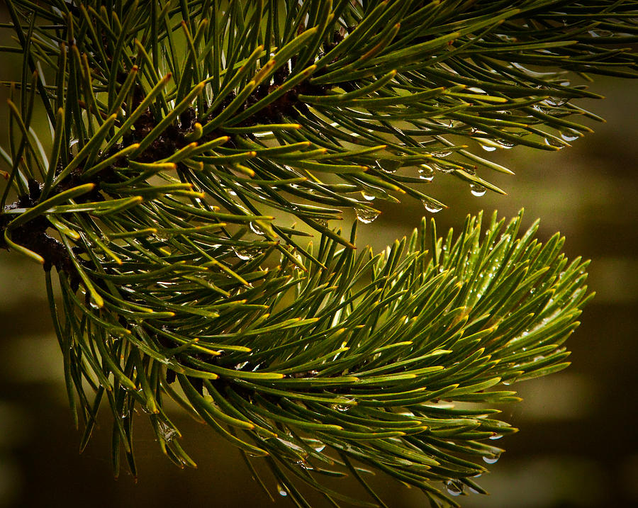 Rocky Mountain State Park Photograph - Rocky Mountain Rain by Patrick  Flynn