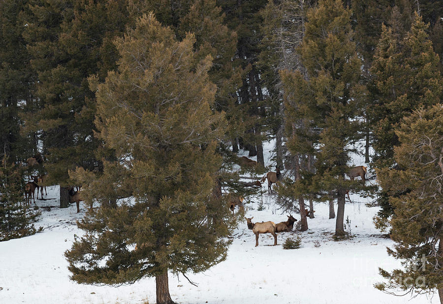 Rocky Mountain Winter Serenity Photograph