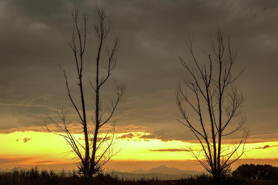 Rocky Mountains Horizon Through The Trees by James BO Insogna