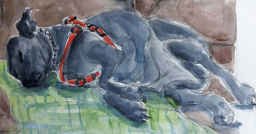 Watercolor Painting - Rocky Napping by Janet Butler