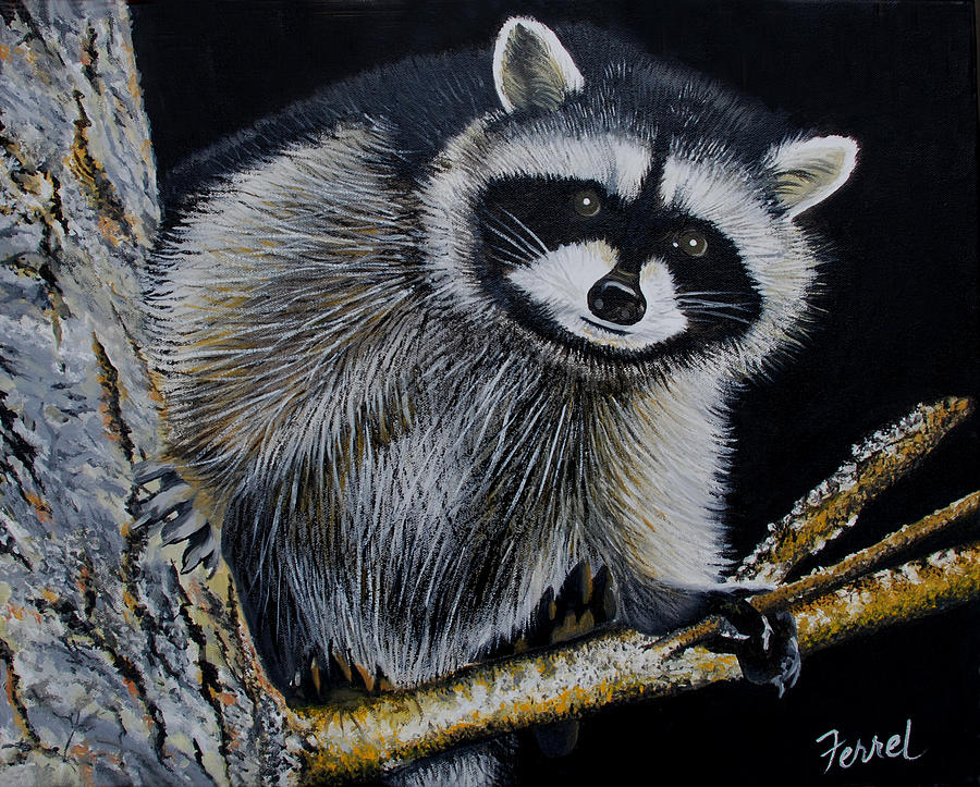 Rocky Raccoon Painting by Ferrel Cordle Raccoon Painting