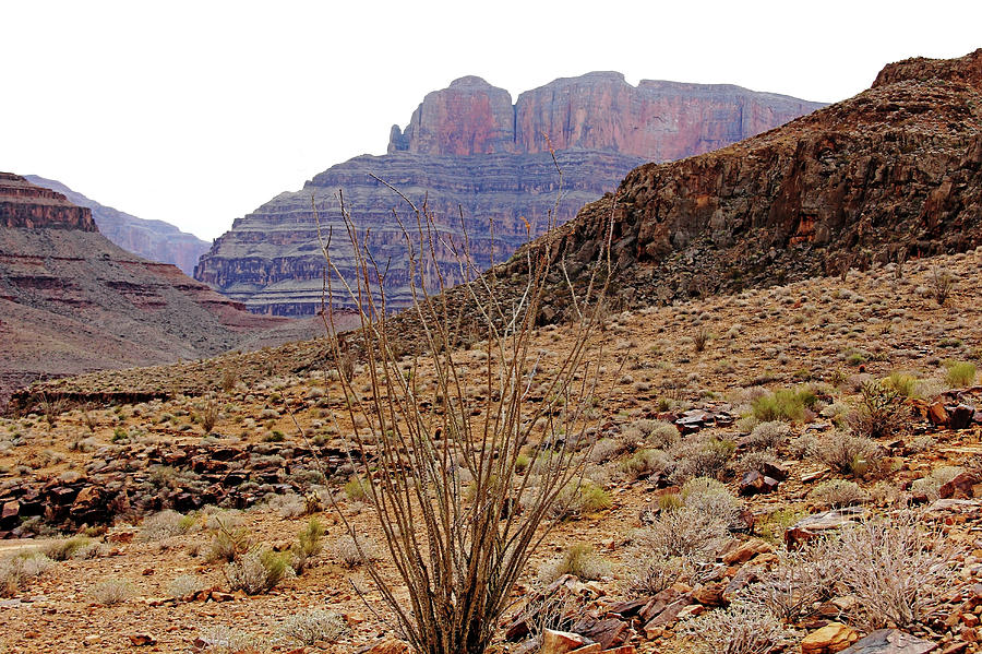 Grand Canyon Photograph - Rocky Slope Grand Canyon by Debbie Oppermann