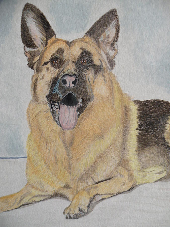 Rocky The Alsatian Painting by Alan Webb