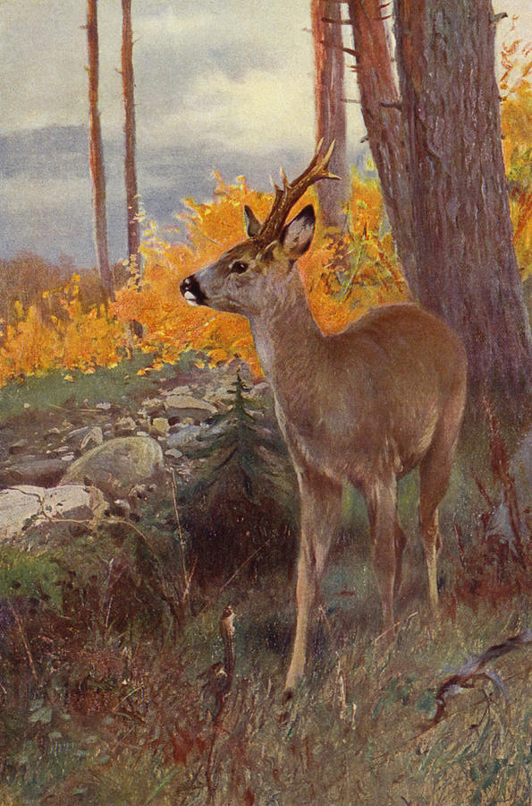 Roe Deer Painting By Wilhelm Kuhnert