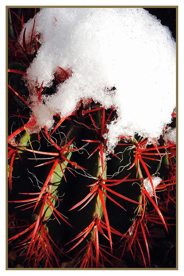Rojo by Cheryl Goodberg