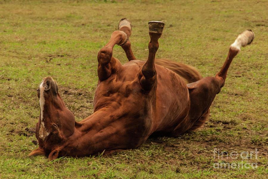 Horse Photograph - Roll Over by Bernd Billmayer