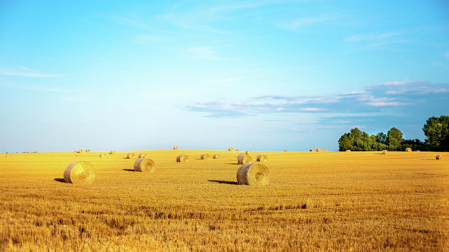 Rolled Hay Photograph