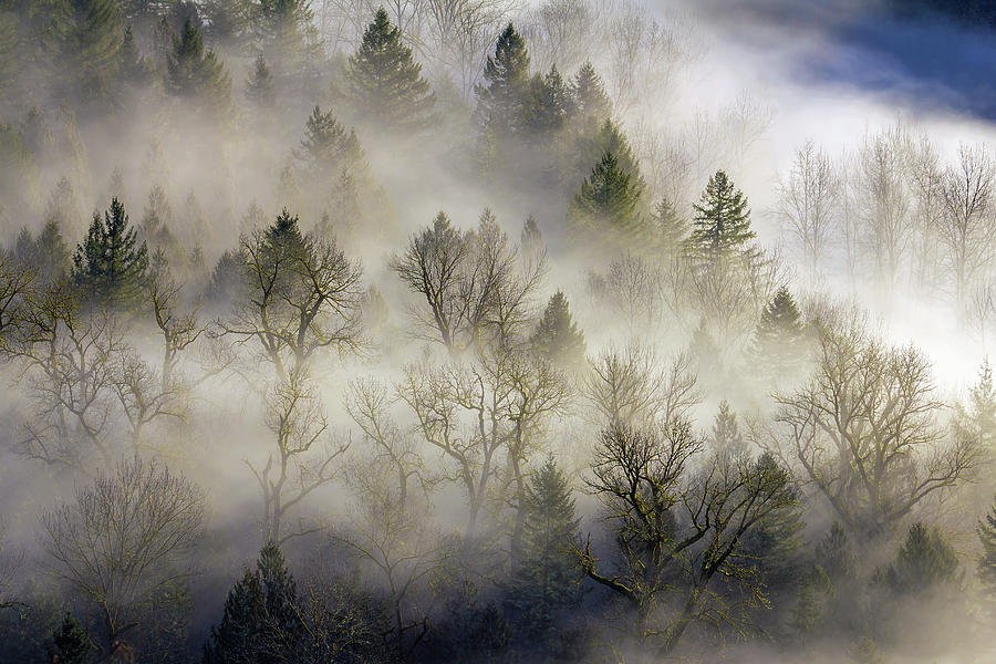 Mount Hood Photograph - Rolling Fog In Sandy River Valley by David Gn
