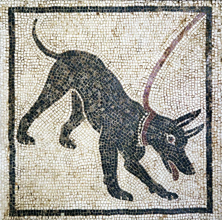 Animal Photograph - Roman Guard Dog Mosaic by Sheila Terry
