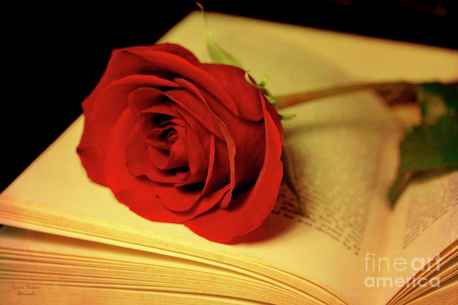 Romance in Literature by Mechala Matthews