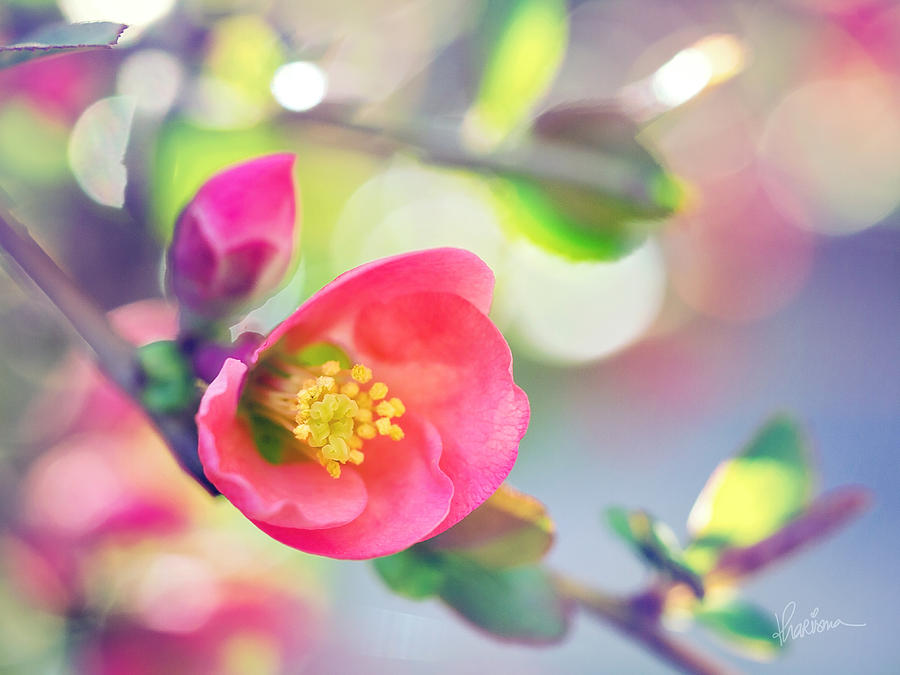 Macro Photography Photograph - Romancing Spring I by Kharisma Sommers