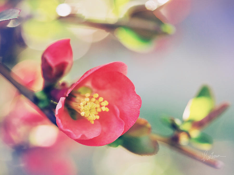 Macro Photography Photograph - Romancing Spring II by Kharisma Sommers