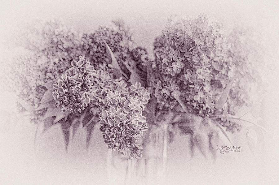Romancing the Lilac by Joy Gerow